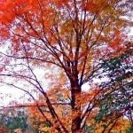 エリイサ・ノヴィック メープル(秘書)の木との会話